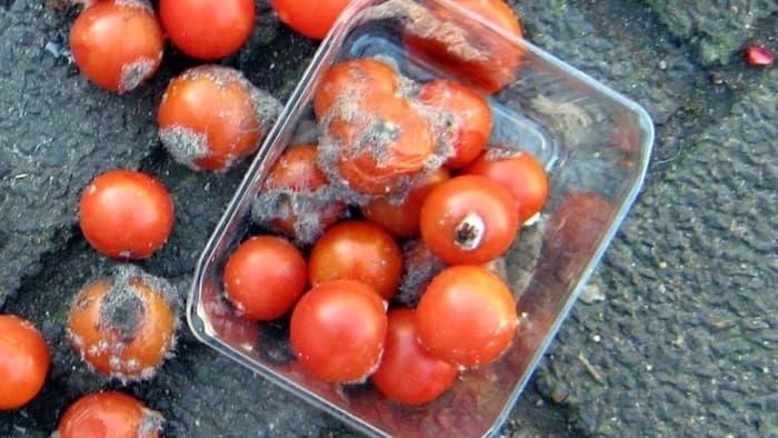 Испорченные помидоры превратятся в топливный элемент