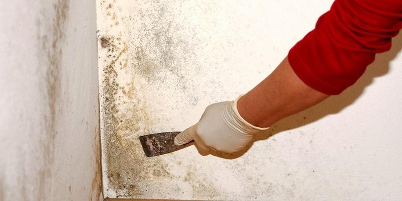 Грибковое поражение бетона сайт бетон