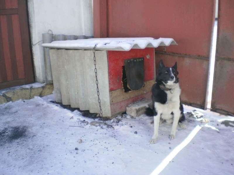 Отопление в будке собаки. Необычное решение - фото 1
