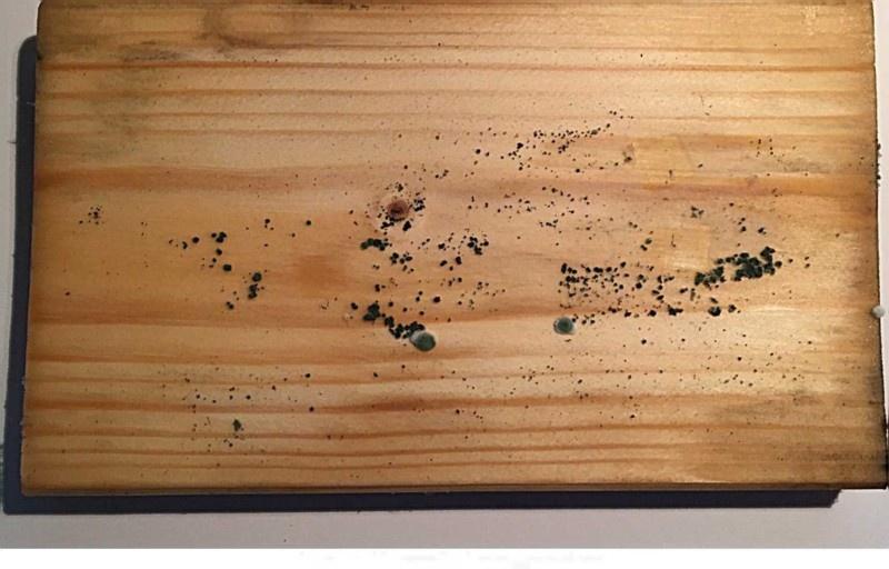 Обзор масляного грунта Schutz Grund-Öl GNature - фото 3